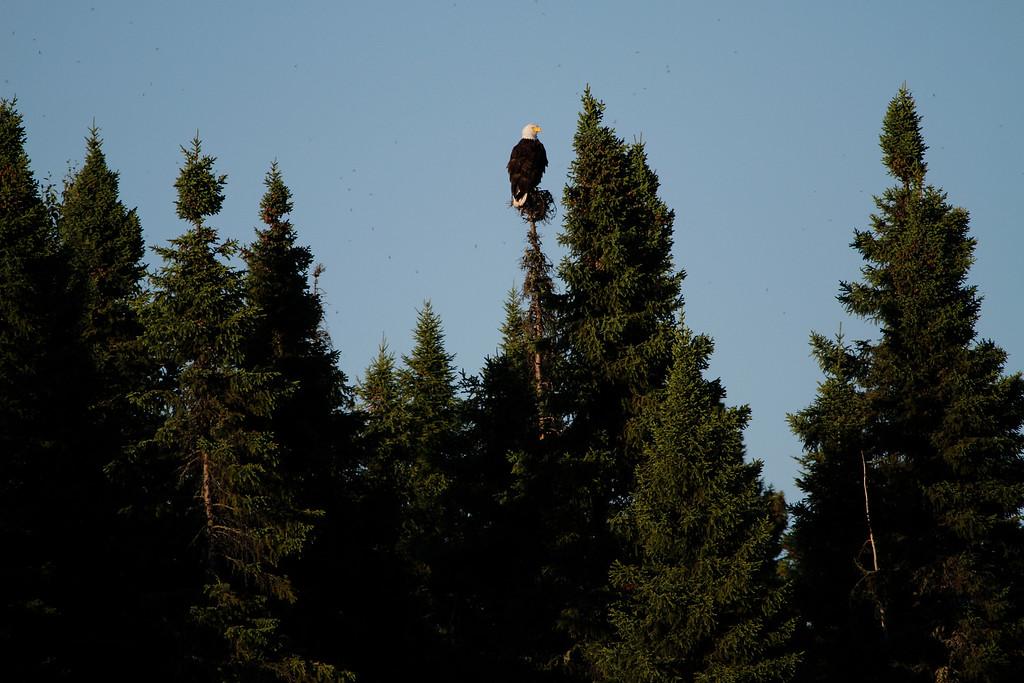 Canada eagles 15 (2010)