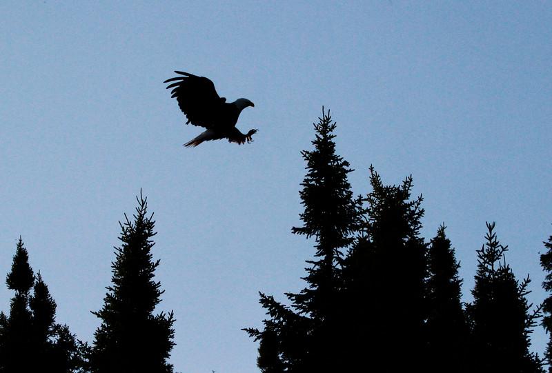 Canada eagles 11 (2010)