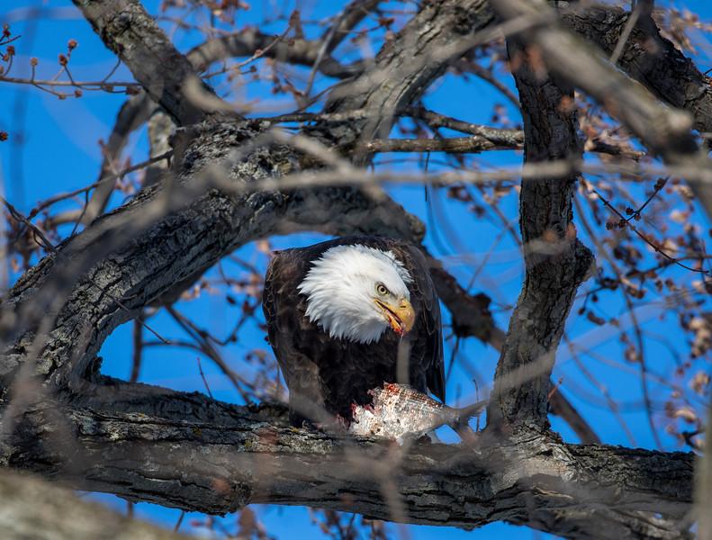 Eagles 47  (1-5-2018)