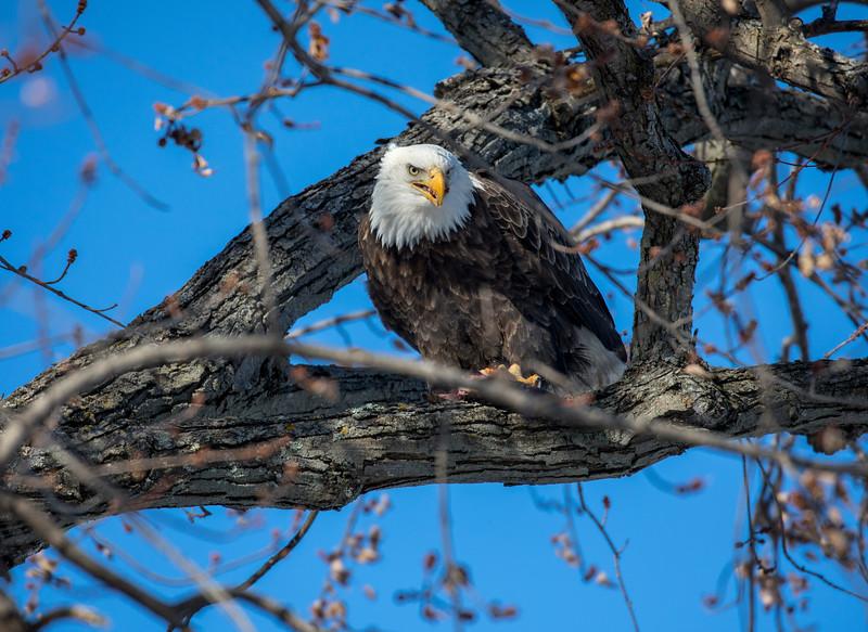 Eagles 40  (1-5-2018)