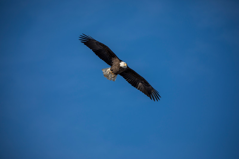 Eagles 30  (1-5-2018)