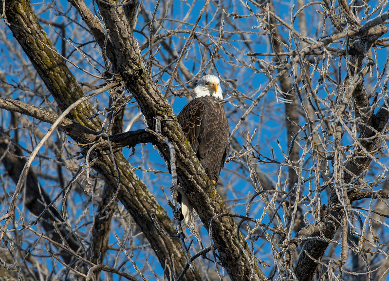 Eagles 7 (1-5-2018)