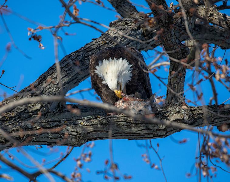 Eagles 38  (1-5-2018)