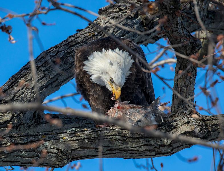 Eagles 39  (1-5-2018)