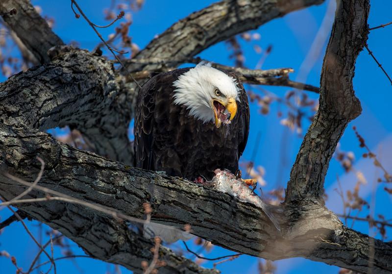 Eagles 50  (1-5-2018)