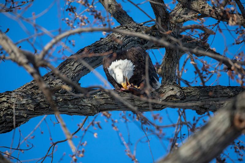 Eagles 45  (1-5-2018)