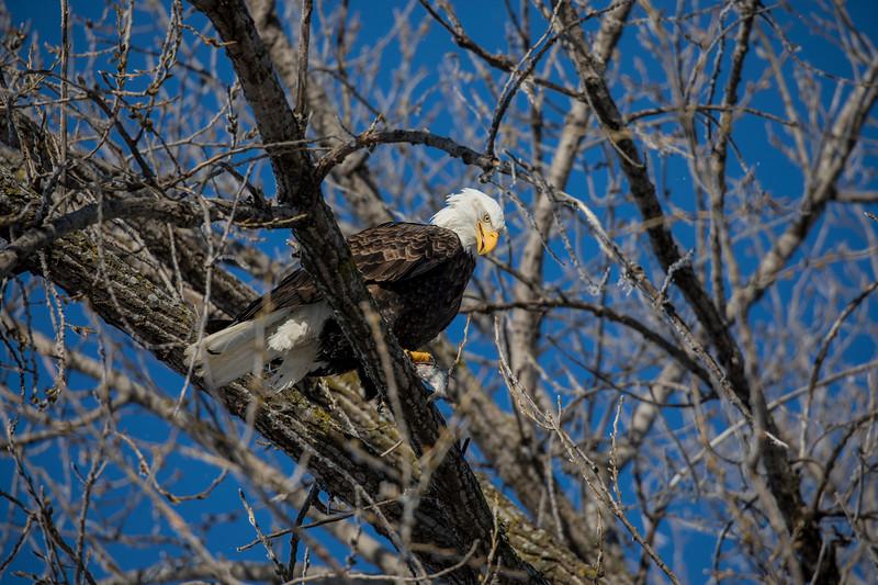 Eagles 17  (1-5-2018)