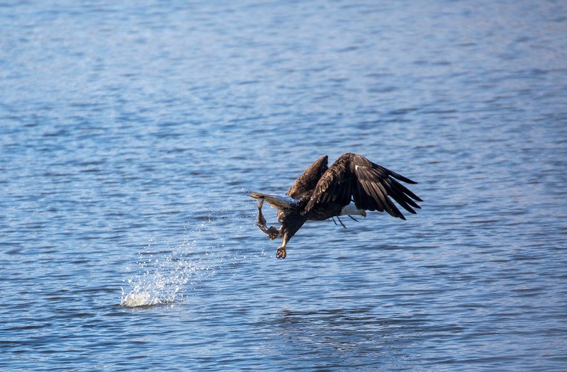 Eagles 28  (1-5-2018)