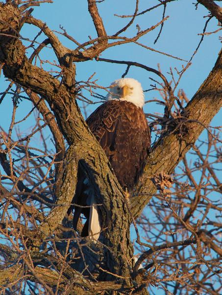 Eagles 4 (2014)
