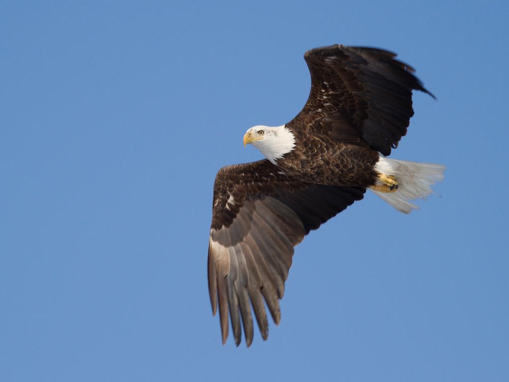 Eagles 7 (2014)