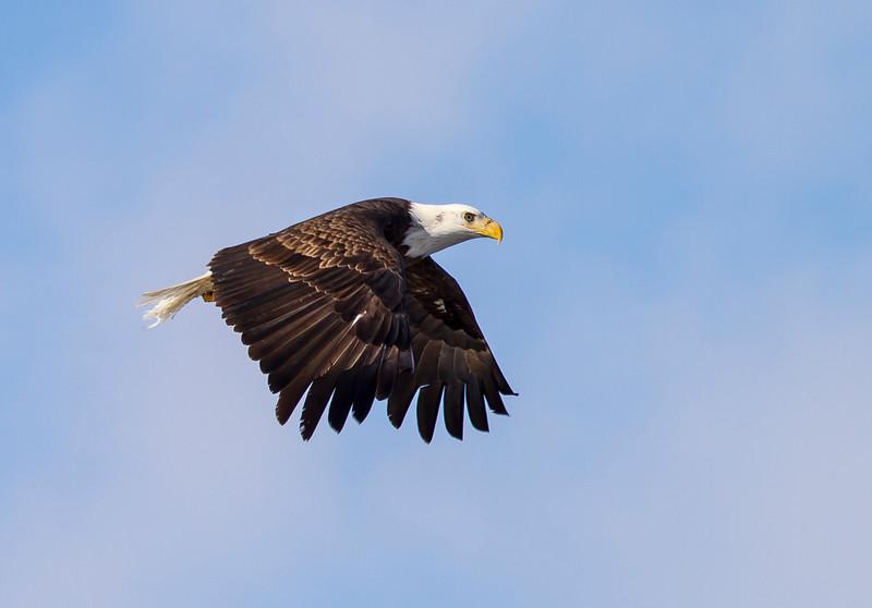 Eagles 3 (2014)