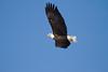 Eagles 8 (2014)