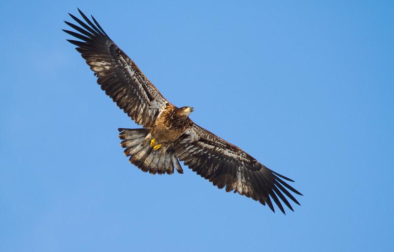 Eagles 2 (2014)