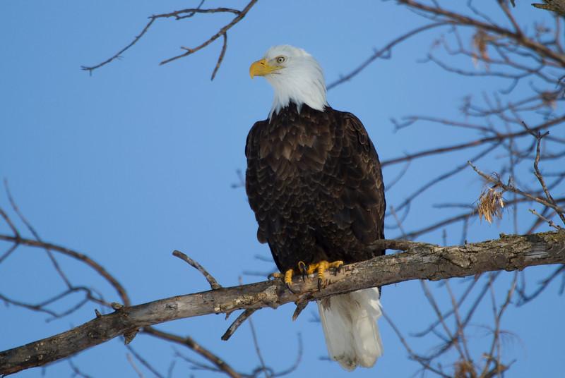 Eagles 1 (2014)