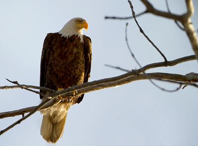 Eagle 5 (2012)