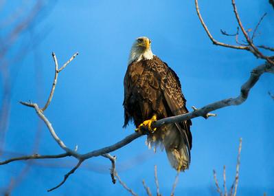 Eagle 6 (2012)