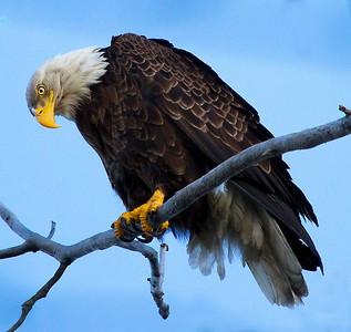 Eagle 13 (2012)
