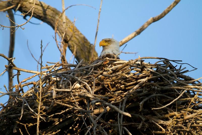 Eagle 9 (2012)