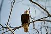 Eagle 1 (2012)