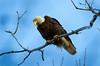 Eagle 10 (2012)