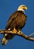Eagle 14 (2012)