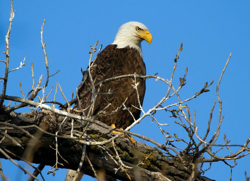 Eagle 3 (2013)