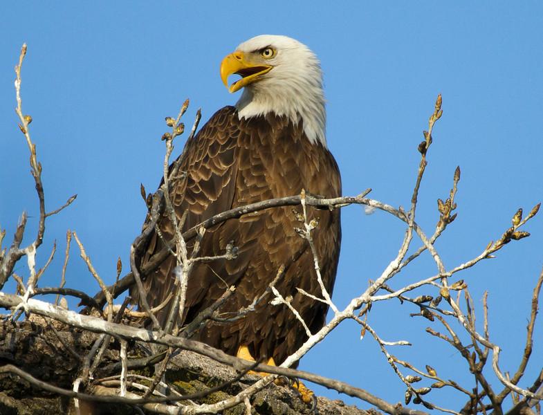 Eagle 4 (2013)