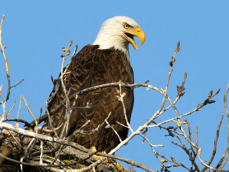 Eagle 2 (2013)