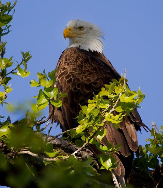 Eagles 28 (2011)