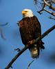 Eagles 8 (2011)