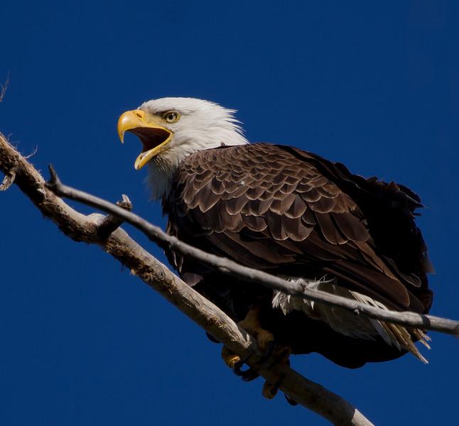 Eagles 27 (2011)