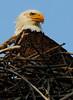 Eagles 14 (2011)