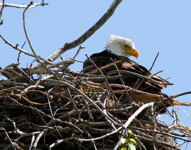 Eagles 23 (2011)