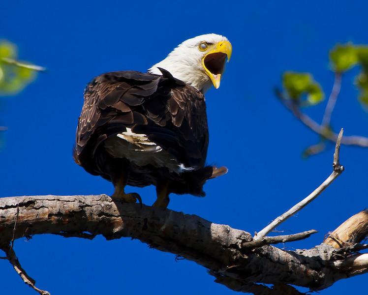 Eagles 15 (2011)