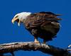 Eagles 19 (2011)