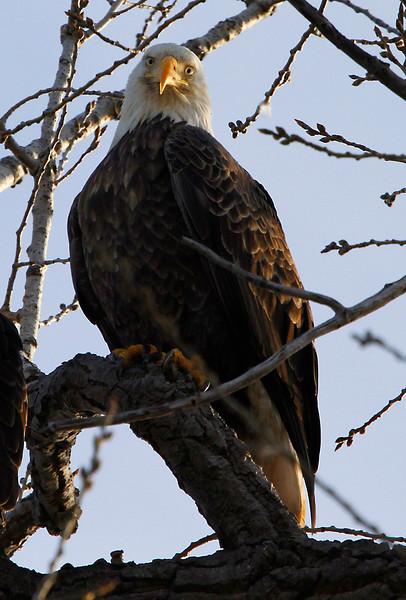 Eagles 3 (2011)