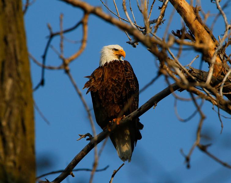 Eagles 11 (2011)