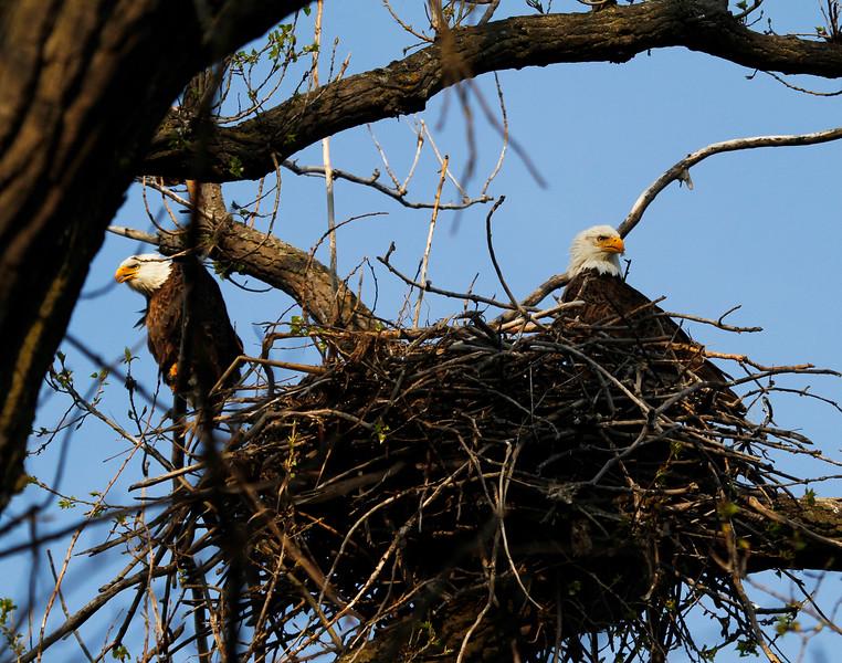Eagles 7 (2011)