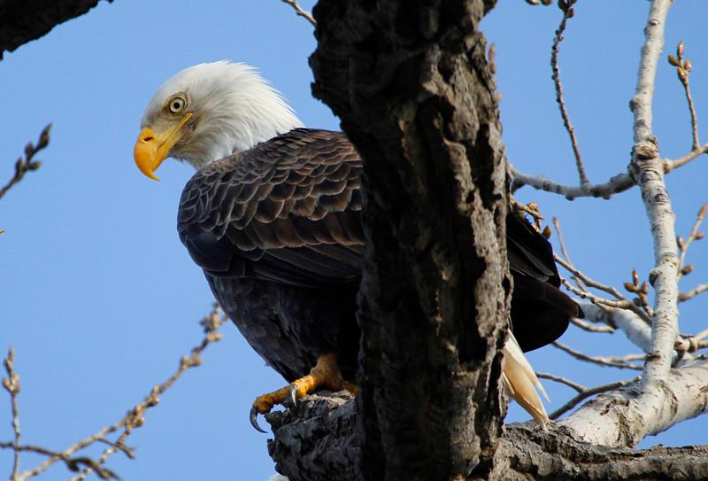 Eagles 4 (2011)