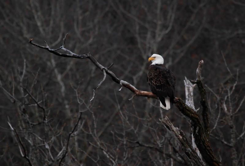 Eagles 1 (2011)