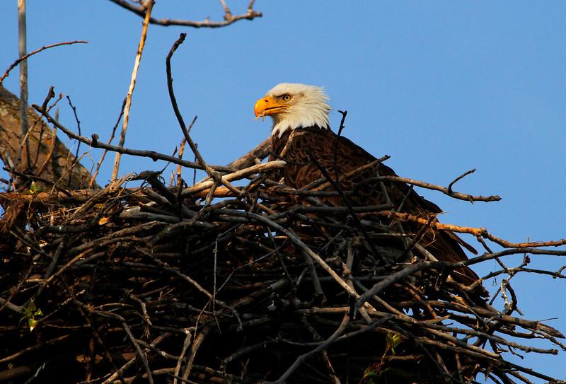 Eagles 17 (2011)