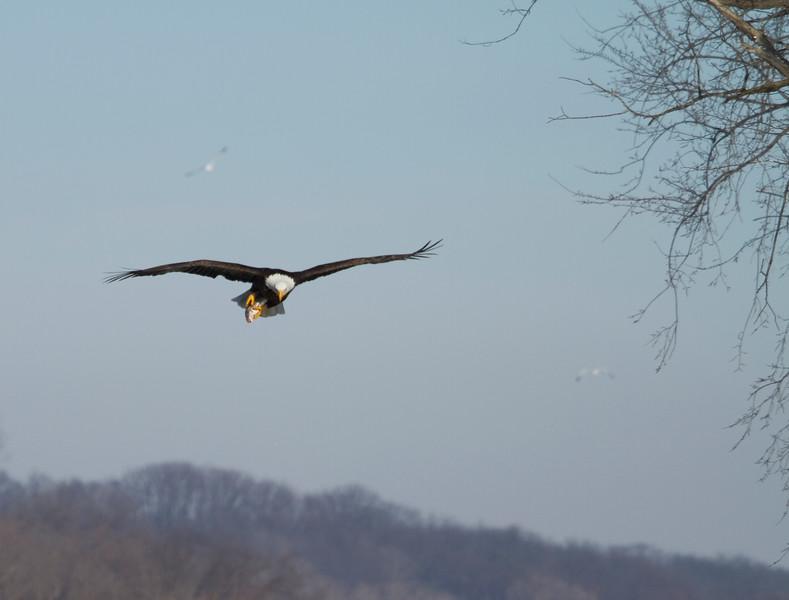 Iowa eagles 29 (2010)