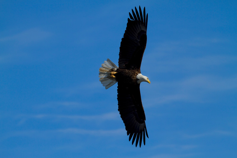 Iowa eagles 37 (2010)