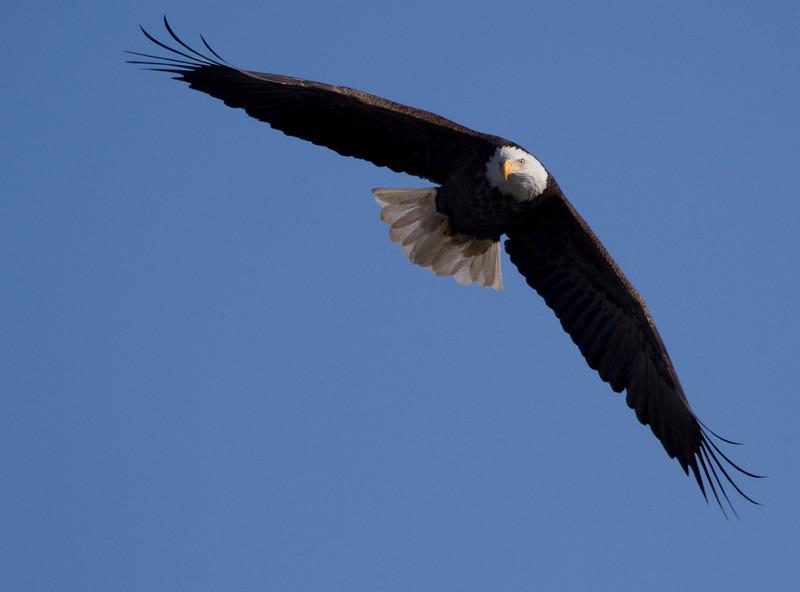 Iowa eagles 44 (2010)