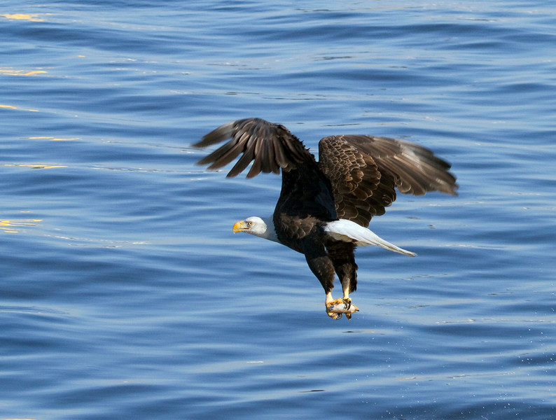 Iowa eagles 26 (2010)