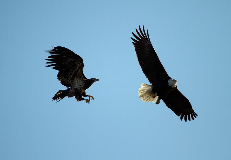 Iowa eagles 53 (2010)