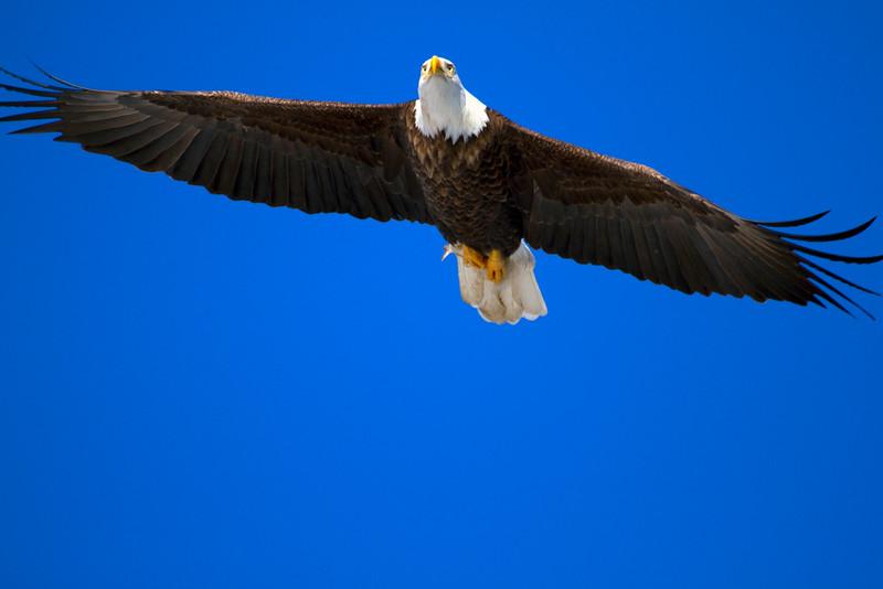 Iowa eagles 48 (2010)