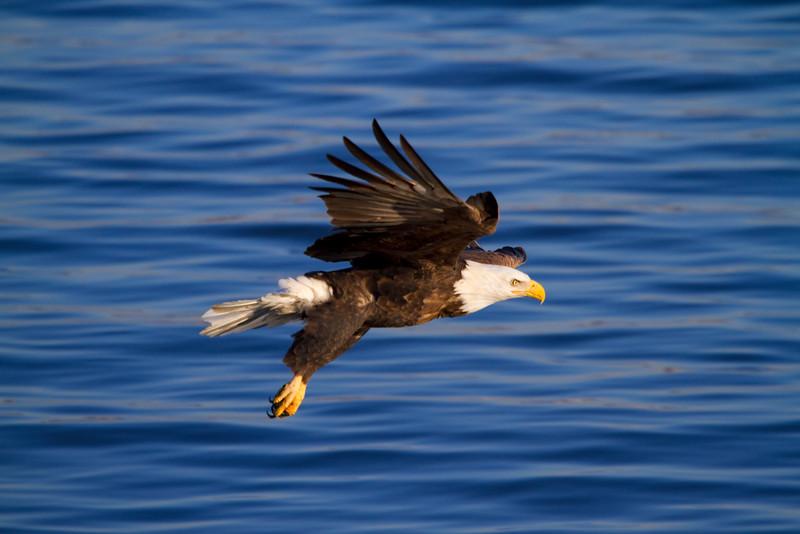Iowa eagles 46 (2010)