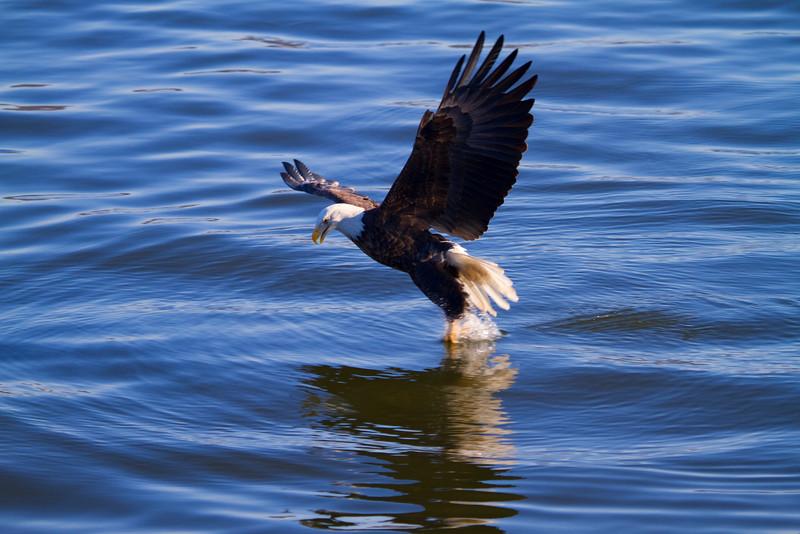 Iowa eagles 20 (2010)