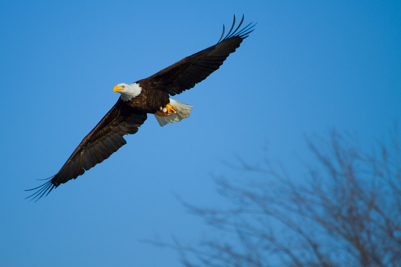 Iowa eagles 35 (2010)
